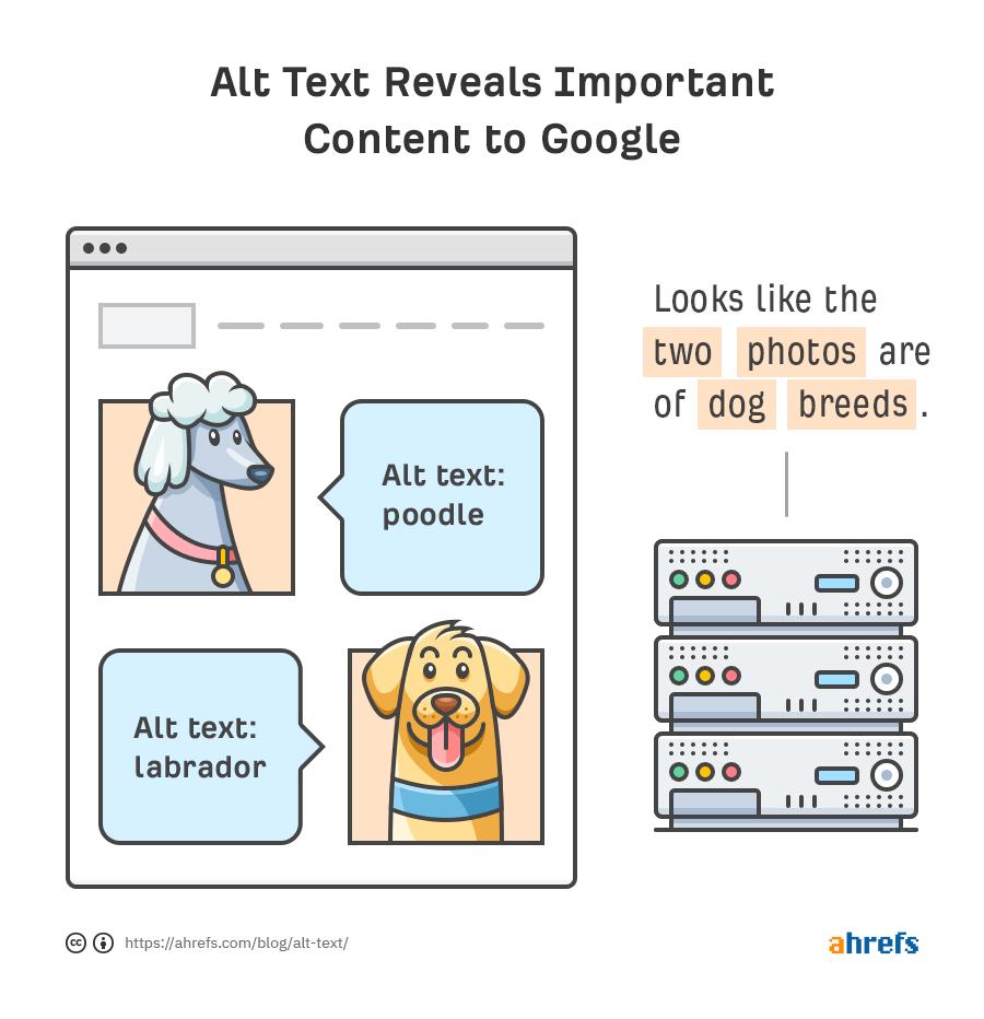 altテキストが記述されている場合、ページのトピックや意味を理解するのに役立つ
